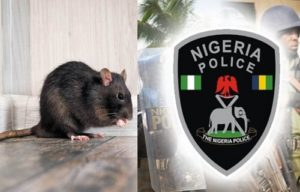 Rats ate deceased baby's ear at Anambra hospital–Police